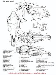 Horse Anatomy Coloring Book Loading Zoom