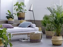 die fünf besten pflanzen für zuhause selbermachen de
