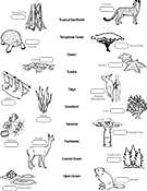 Ask A Biologist Coloring Page Biome Matching Game Worksheet