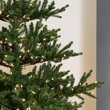 Pre Lit Slim Christmas Tree Asda by 7ft Xmas Tree 7ft Bavarian Premium Pine Black Christmas Tree