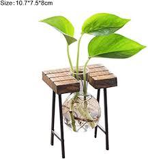 molre yan pflanze hydrokultur glas flasche grün pflanztopf
