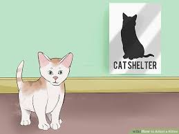adopt a cat how to adopt a kitten with pictures wikihow