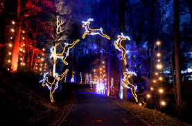 Millers Christmas Tree Farm Nc by Christmas Lights At Tanglewood Clemmons Nc Another Must See