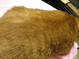 my cat has dandruff flakey cat how to get rid of dandruff on your cat clothes and
