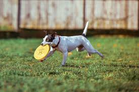 Canned Pumpkin For Dog Constipation by 8 Easy Home Remedies For Dogs Yorba Regional Animal Hospital