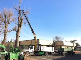 Grapple Truck Tree Removal - Grover Landscape Services Grapple Truck Tree Climbers Services 2004 Sterling L8500 Acterra Truck Item Am9527 So 2011 Intertional 7600 6x4 Magnet C31241 Trucks Figrapple Built By Vortex And Equipmentjpg Removal Grover Landscape The Buzzboard 2008 Freightliner M2 Tandem Axle Grapple Log Loaders 2006 Lt8513 Builtrite 10 Rail Custom 2016 Kenworth T800 Youtube In Covington Tn For Sale Used On Buyllsearch