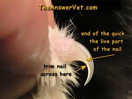 how to cut a cats nails all about nail trims for dogs and cats and what to do if you cut