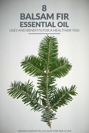 Canaan Fir Christmas Tree Needle Retention by Best 25 Balsam Fir Tree Ideas On Pinterest Fir Cones Noble Fir