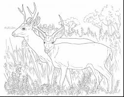 Deer Coloring Pages Wonderful Head With Page Download