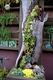 An Old Log Is A Perfect Conainer For Really Creative Succulent Garden