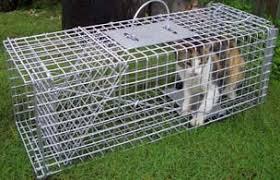 live cat trap trap rental
