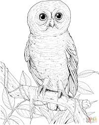 Click The Big Eyed Owl Coloring Pages