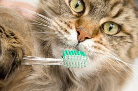 cat dental care dental care for dogs cats blue buffalo