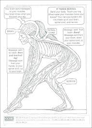 Anatomy Coloring Book Free And Brain Also The