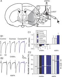 Bed Nucleus Of The Stria Terminalis by A Switch In The Neuromodulatory Effects Of Dopamine In The Oval