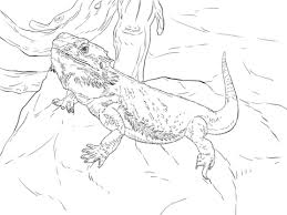 Click To See Printable Version Of Central Bearded Dragon Coloring Page
