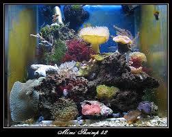 aquarium nano eau de mer bac eau de mer crevettes aquarium 42