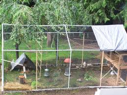 Recent Aviary | BackYard Chickens Google Image Result For Httpaussiefinchbreedcomphotogallery Parrot Aviary Outdoor Sale Net Avaries Birds Button Quail Aviary A View From My Summerhouse Macaw And Pigeon Youtube Recent Backyard Chickens Amazoncom Omitree Large Pet Cage Cockatiel Conure The Rescue Report The Old Lady Pigeons Retirement Home Building A Flight Or Coz Amazing 26 Backyard Ideas On Rdcny Best Price On Hotel In Siem Reap Reviews