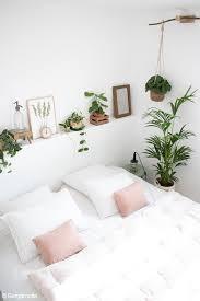 zimmerpflanzen so pflegst du sie im sommer richtig