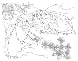Fancy Desert Animal Coloring Pages 49 For Site With