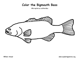 Bass Coloring Pages Page For Kids