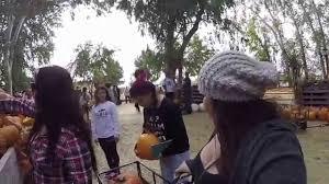 Kula Pumpkin Patch banducci u0027 pumpkin patch youtube