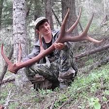 Elk Shed Hunting Utah by Brandon Pitcher Youtube