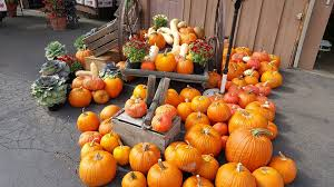 Apple Orchard Pumpkin Patch Sioux Falls Sd by Davis Orchards Home Facebook
