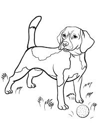 Labeled Realistic Beagle Coloring Pages