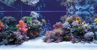 Any Salties Out There Saltwater Aquascapes Aquascaping World Forum ... Hamsa Wabikusa Style Aquascaping World Forum Httpwww Nature Aquarium And Aquascaping Wiki 25l Nano Capa 2011 French Aquascapers Results My Scape Iaplc Rank 70 The Passing Of Legend Takashi Amano Magazine With Nicolas Guillermin Surreal Submarine Amuse Aquascape The Month August 2010 Beyond Riccardia Chamedryfolia Question This Is Ada 2009 Susanna Aquascape Garden Bonsai Plants