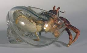 Do Hermit Crabs Shed Shell by Artist Makes Hermit Crab A New Glass Shell Unusual Animals