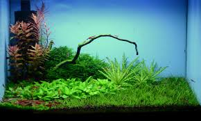 Nano Aquascape Aquarium - Shrimp - YouTube Aquascaping Aquarium Ideas From Aquatics Live 2012 Part 2 Youtube How To Make Trees In Planted Aquarium The Nature Style Planted Tank Awards Ultimate Shop In Raipur Fuckyeahaquascaping My 90p Tank One Month See Day 1 Here Best 25 Ideas On Pinterest Home Design Designs Aquascape Happy Journey By Adil Chaouki 1ft Cube Aquascaping Fuck Yeah Anyone Do For Your Fish Srt Hellcat Forum Archives Javidecor