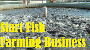 How To Start Fish Farming Business - YouTube Build Your Own Backyard Pond Fish Farm Minnow Bait Trap Breeding Bestfishforaquaponic1 Aquaponics Greenhouse Pinterest Sustainable Farming How To Dig A Raise Backyard Aquaponic Fish Hatchery Youtube Stock Rainbow Trout In Back Yard Commercial Feed Wikipedia In Home Worldwide To Insteading For Food Or Profit At My Tank Small Scale Based Farms Aquaculture Equipment Landbased Project Ras Indoor