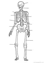Anatomy Coloring Book Pages Free Printable