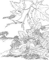 Chickadee Beautiful Bird Coloring Page