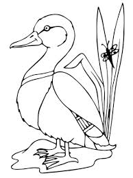 Click To See Printable Version Of Mallard Duck Coloring Page