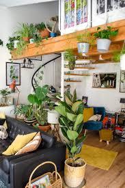 5 pflegeleichte zimmerpflanzen für dein heim