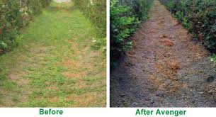 Avenger Weed Killer Before And After Organic