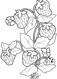 Download Ladybug And Strawberry Fruit Coloring Pages Or Print