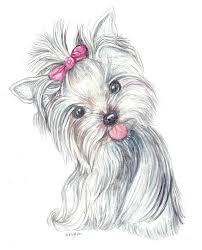 Yorkie Puppy Painting By Morgan Fitzsimons