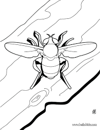 Small Coloring Pages For Adults Free Printable Beetle Page Source Heart