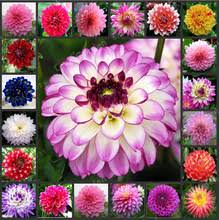 buy flower bulbs sale and get free shipping on aliexpress