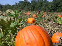 Chesterfield Pumpkin Patch 2015 by 12 Reasons Why Fall Is The Best Time Of The Year In Virginia