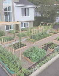 Exotic Pallet Vegetable Garden Images