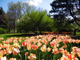 File Foster Park tulips Fort Wayne Indiana May 2014