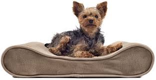 Bolster Dog Bed by Amazon Com Furhaven Pet Small Microvelvet Luxe Lounger