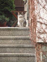 cat stairs cat on the stairs stock photo image 52870229