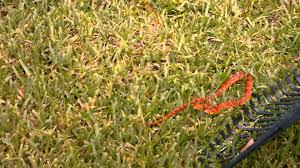 Red Rat Snake In Florida Backyard (Part 2) - YouTube Backyard Snakes Effective Wildlife Solutions Snakes And Beyond 65 Best Know Them Images On Pinterest Georgia Of Louisiana Department Fisheries Southern Hognose Snake Florida Texas Archives What Is That 46 The States Slithery Species Nolacom Scarlet Kingsnake Cottonmouth Eastern Living Alongside Idenfication Challenge The Garden Or Garter My Species List New Engdatlantic