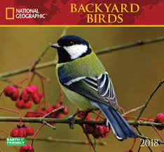 National Geographic Backyard Birds Deluxe Calendar 2018 - Calendar ... National Geographic Backyard Guide To The Birds Of North America Field Manakins Photo Gallery Pictures More From Insects And Spiders Twoinone Bird Feeder Store Birds Society Michigan Mel Baughman Blue Jay Picture Desktop Wallpaper Free Wallpapers Pocket The Backyard Naturalist 2017 Cave Wall Calendar