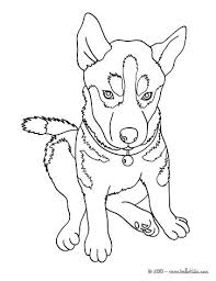 Husky Coloring Pages Beautiful Page Nice Dog Drawing For Kids More Animals On Realistic